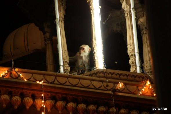 Małpy na Holy Gate