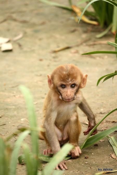 Mała małpka
