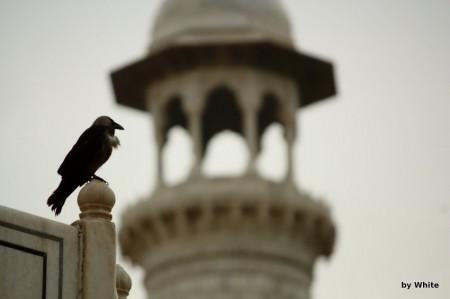Taj Mahal - wrona