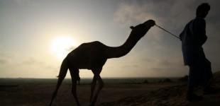 [Trip 2: Rajastan] Camel Safari
