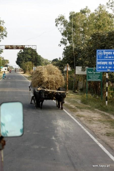 Chiraidongri, Madhya Pradesh, India