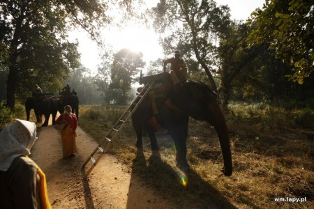 Kānha, Madhya Pradesh, India